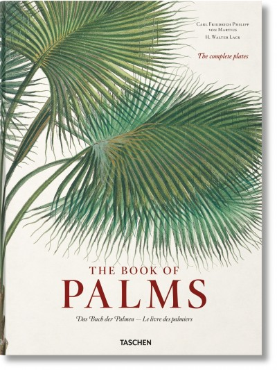 The Book of Palms. von Martius XL